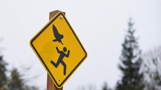 美国一公园猫头鹰频攻击民众 警示牌意外走红